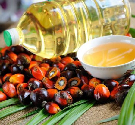 The Wonders of Palm Oil