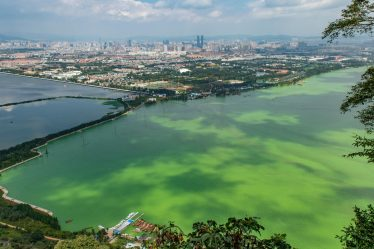 pollution of water: eutrophication