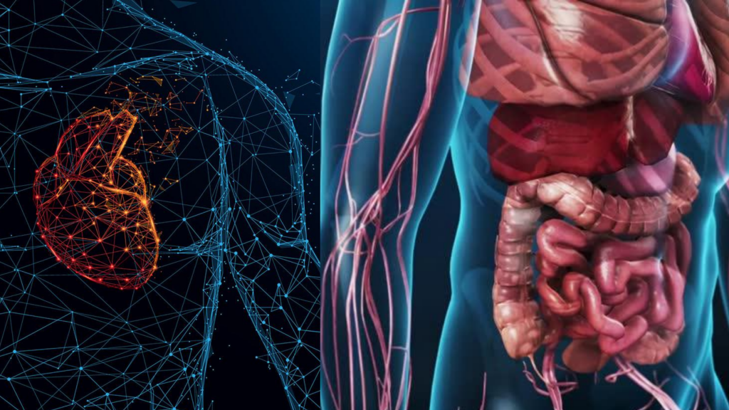 Effects on the Digestive and Cardiovascular Systems