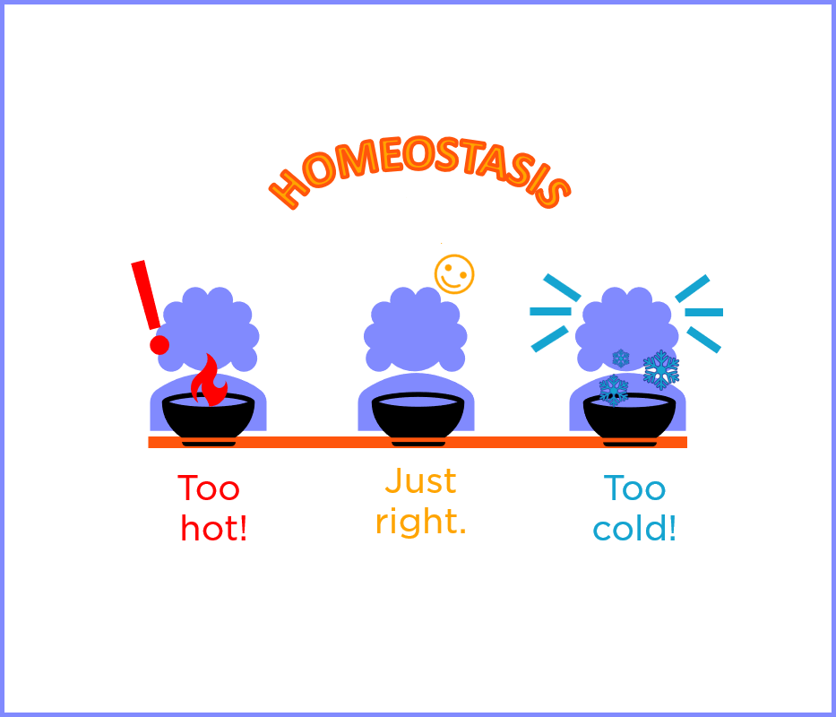 Let's Demystify the Biological Concept of Homeostasis